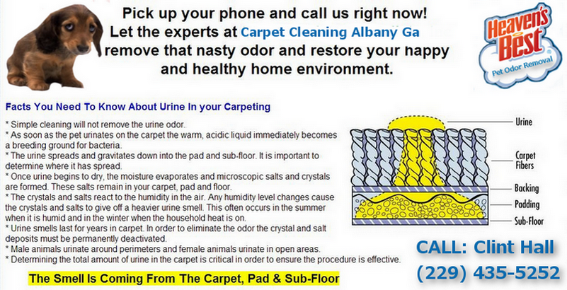 Carpet Cleaning Albany Ga_Heaven's Best Carpet Cleaning_Pet Urine Odor and Stain Removal Albany Ga_Facts