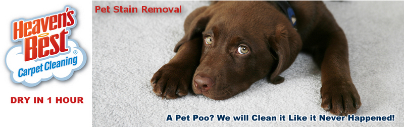 Carpet Cleaning Albany Ga_Heaven's Best Carpet Cleaning_Pet Urine Stain and Odor Removal
