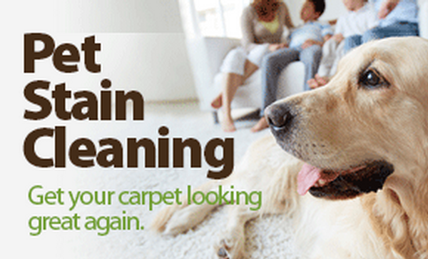 Carpet-Cleaning-Albany-Ga_Pet Stain and Odor Removal